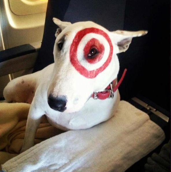 Bullseye Flies First Class Famous Dogs Dog Daycare Near Me