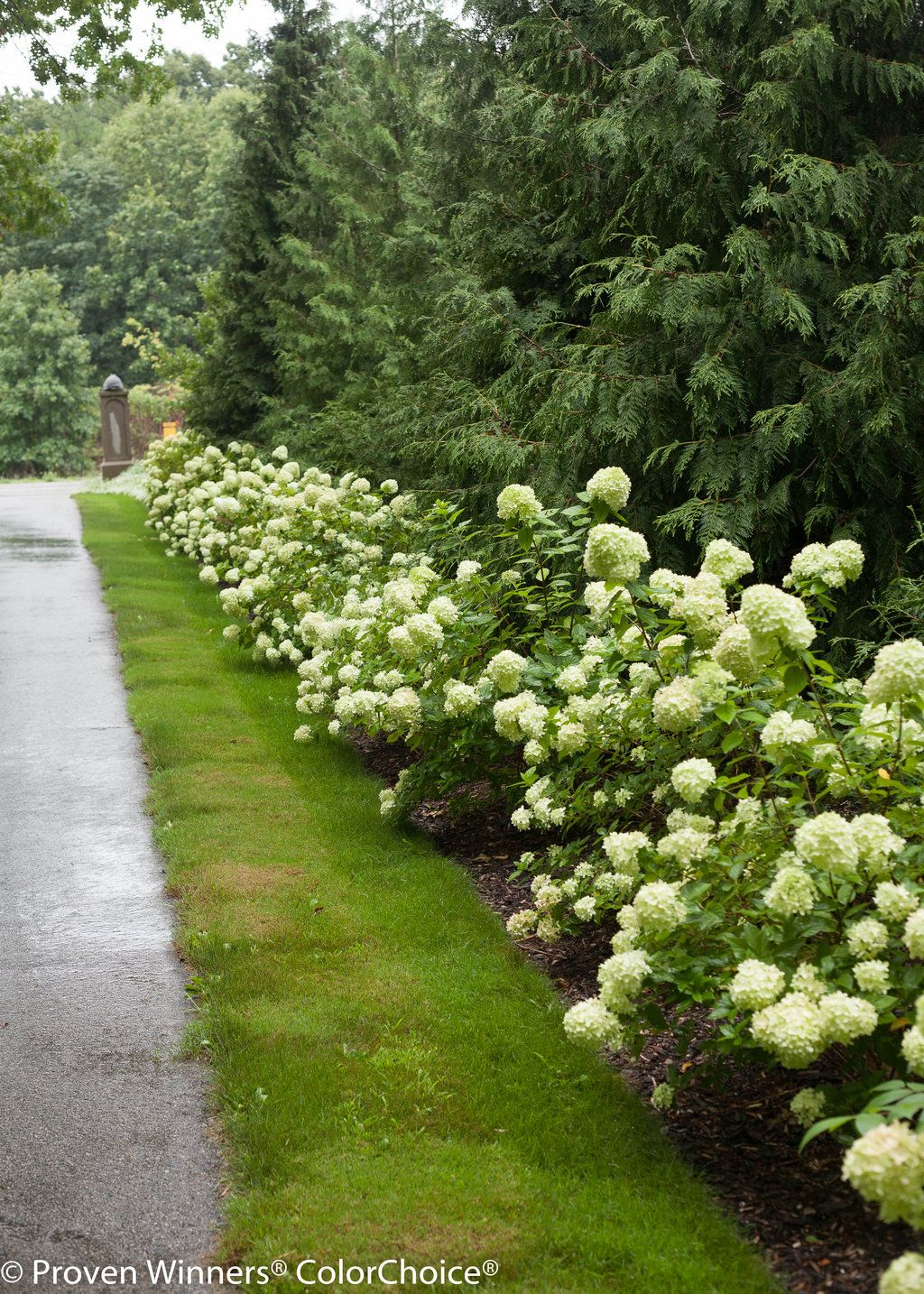 Pin By Proven Winners Plants On Landscape Inspiration Colorful Landscaping Dream Garden Hardy Hydrangea