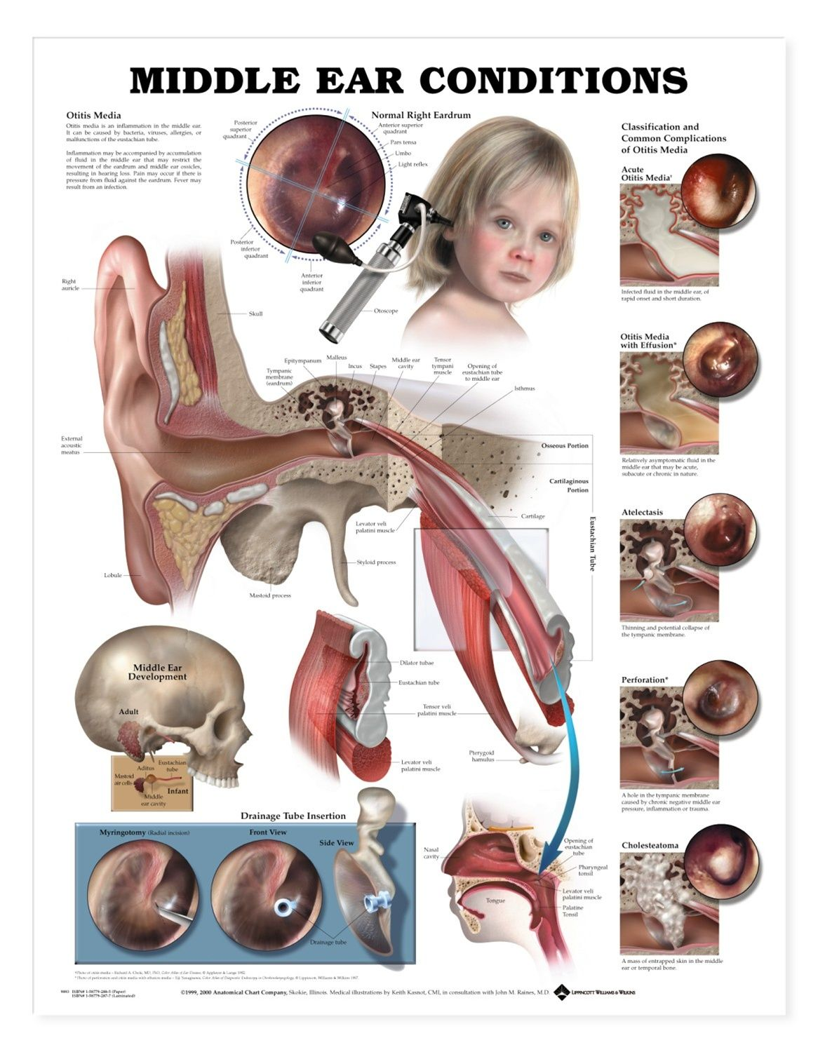 Ear Nose Throat Connection Diagram Wiring For 13 Pin Caravan Socket Best 25 43 Middle Ideas On Pinterest Wax Treatment