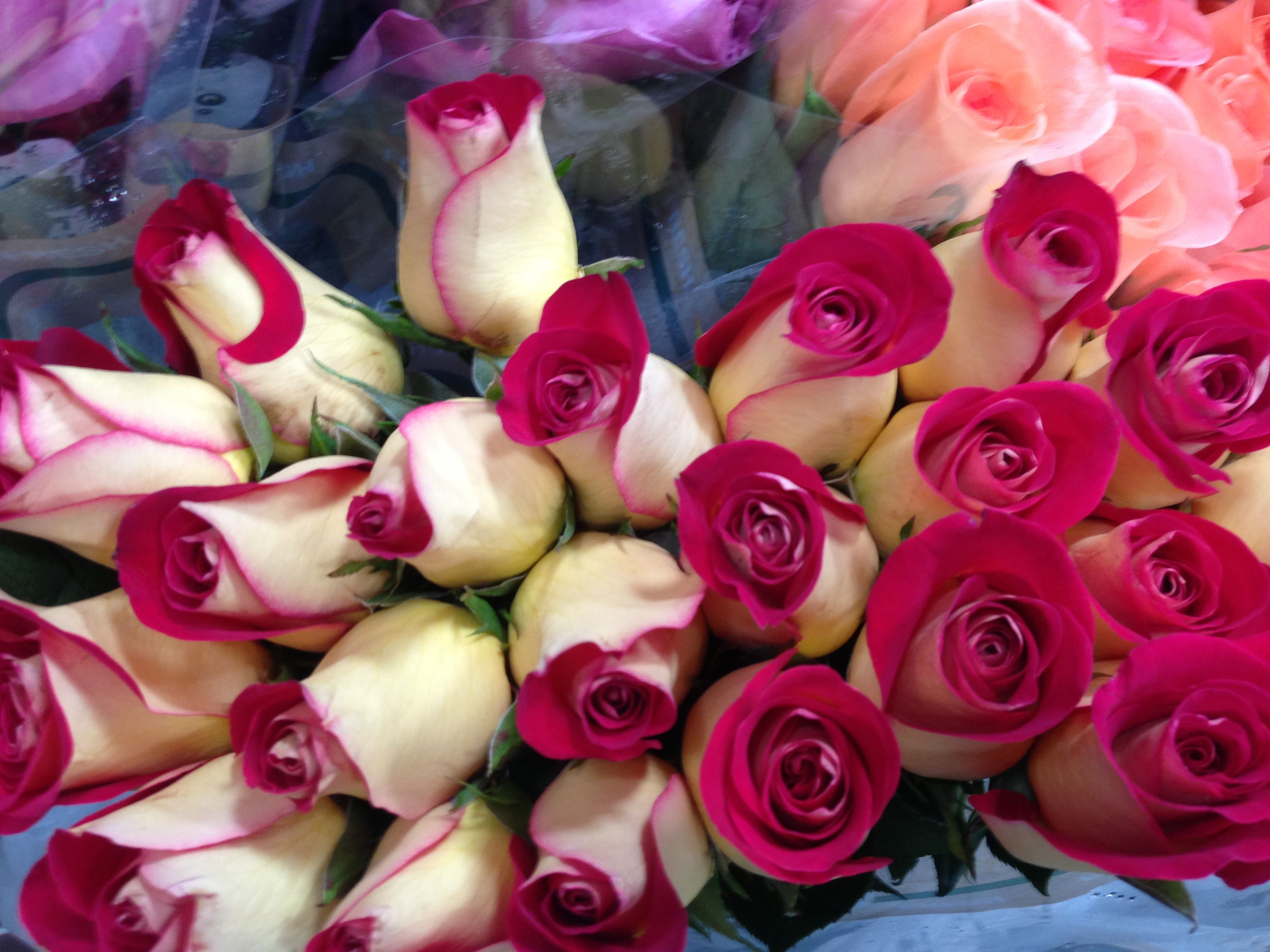 Red tipped #Roses at #Louisville Costco - 16.99 for TWO dozen. Gorgeous! Special orders for events welcome, too!