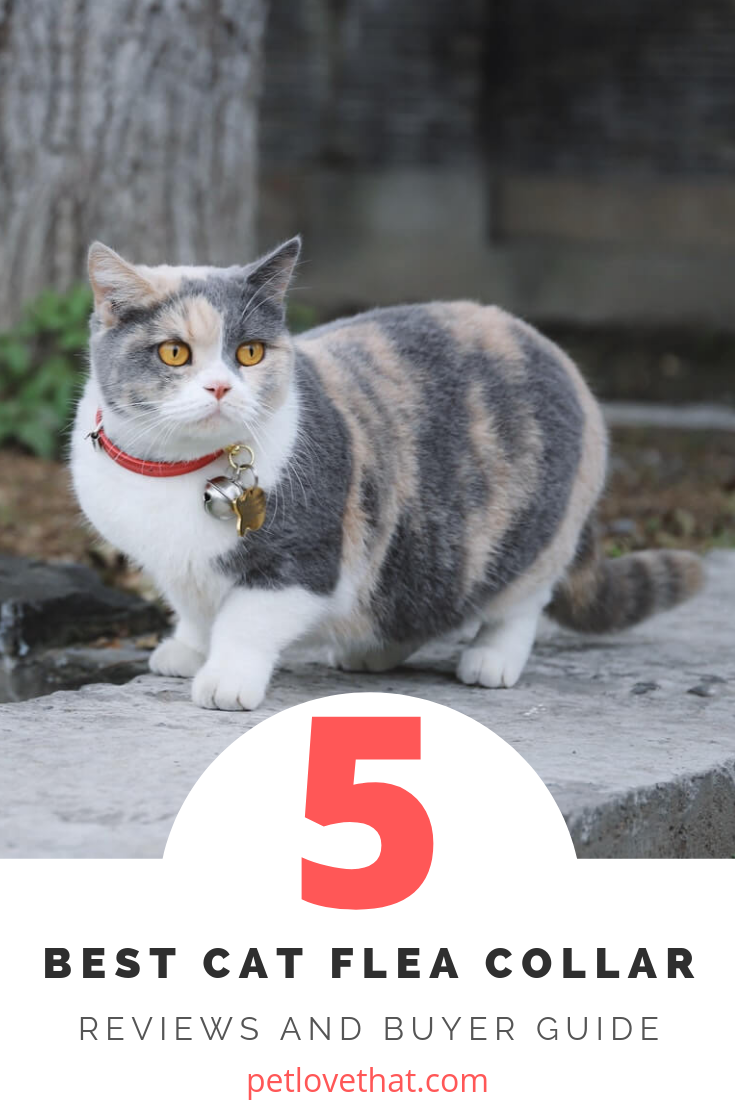 5 Best Cat Flea Collars Reviews And Buyer Guide 2019 With Images Cat Fleas Cat Flea Collar Cute Animals