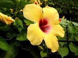 Resultat De Recherche D Images Pour Fleur Ile De La Reunion