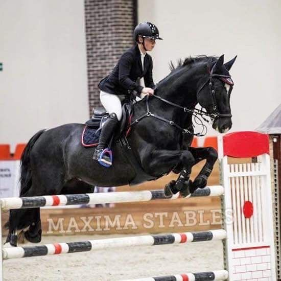 Pin By Kasia Kupijaj On Chevaux Horse Equestrian Different Horse Breeds Show Horses