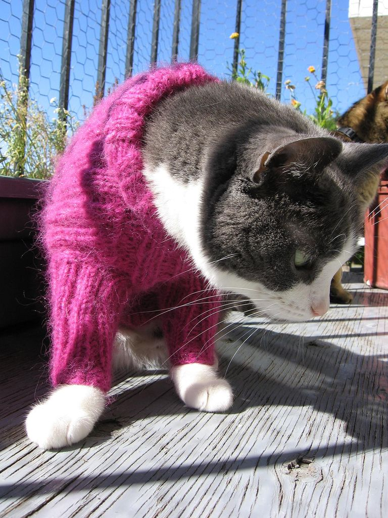 Fantastic Cat Sweater Knitting Pattern Images - Easy Scarf Knitting ...