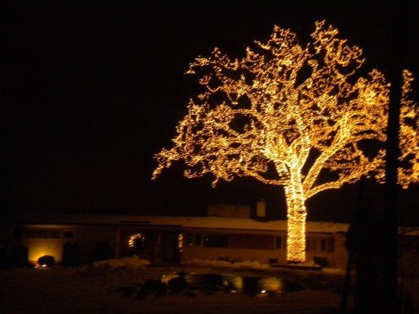 bloomington mn the big tree the owners light up every branch