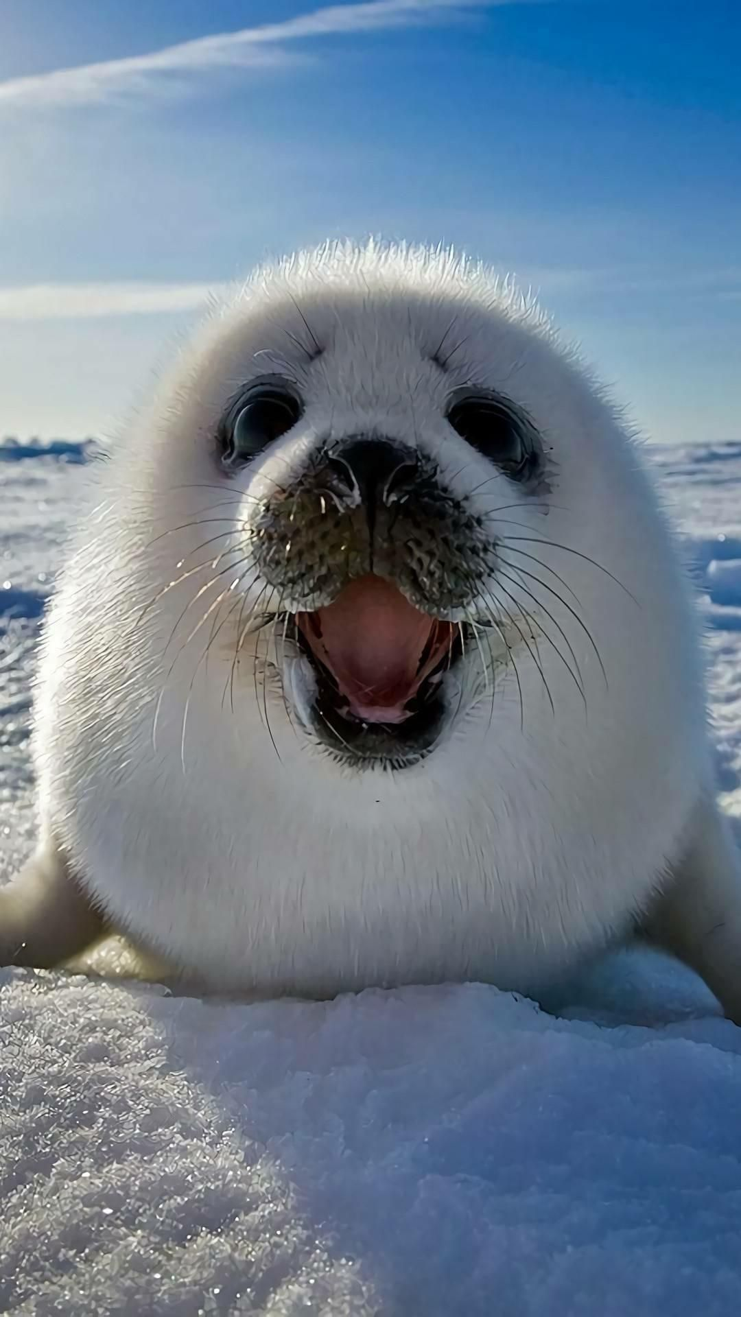 Beautiful2me Cute Seals Cute Animals Funny Animal Pictures