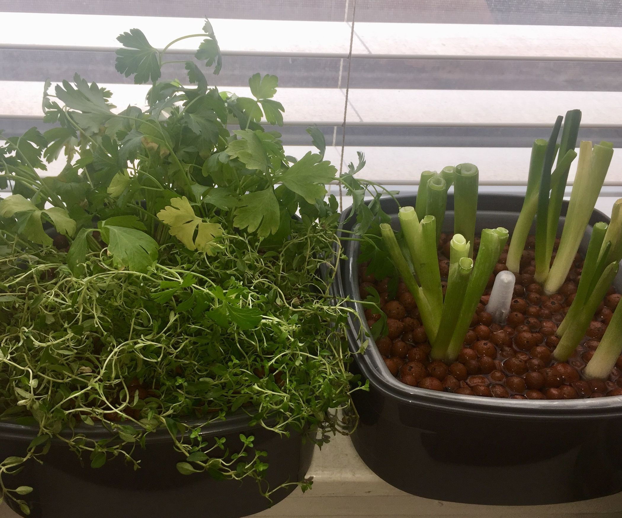 Easy no tools indoor hydroponic herb garden for under 20