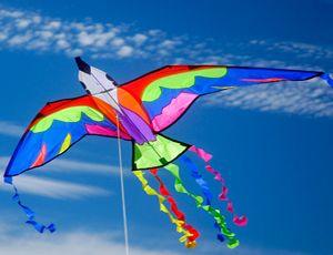 Parrot Kite by Brookite