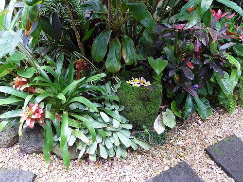 P1070152 (With images) | Small tropical gardens, Tropical ...