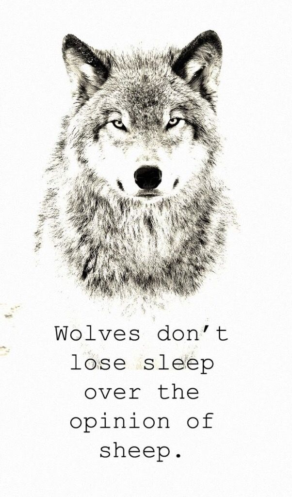 wolves don't concern themselves with the opinion of sheep | Lone wolf  quotes, Wolf quotes, Warrior quotes