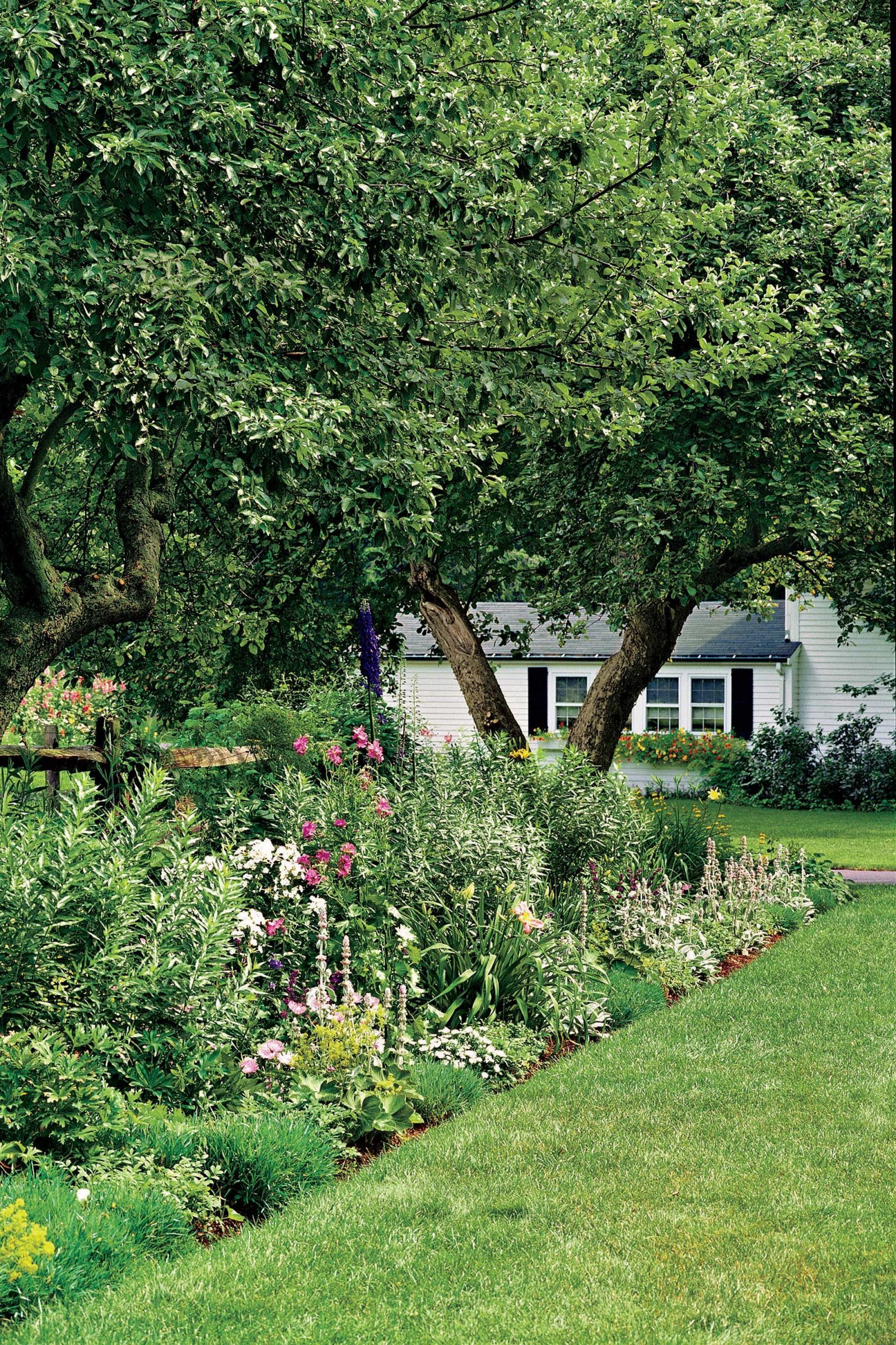 9 Ways to Use Plants to Create Privacy In Your Yard | Privacy ...