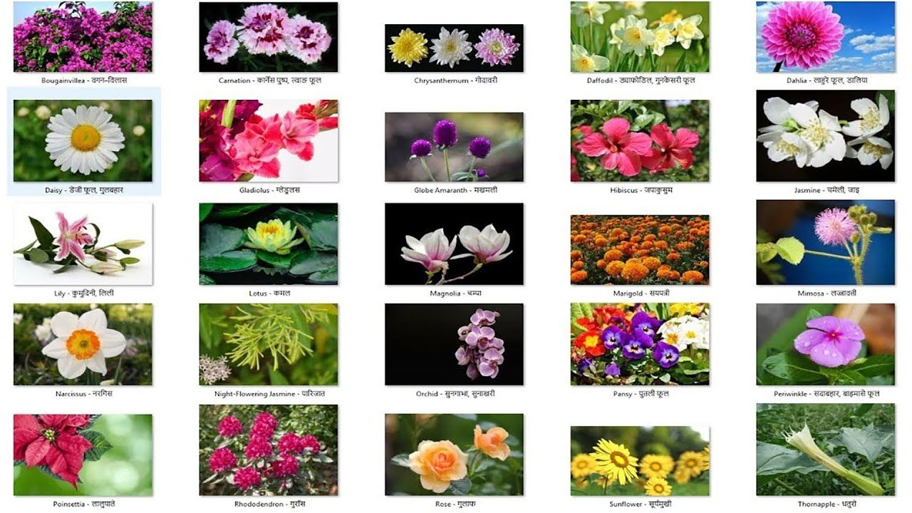 Flowers Tulip Hyacinth Daffodil Rose Orchid Sunflower Calla Lily Poppy Pink Spotted Lily Car Pretty Flower Names Flower Images With Name Flower Names