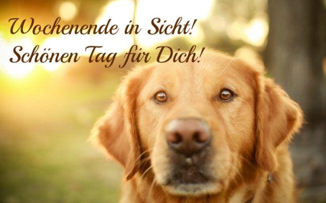 Guten Morgen Bilder Kostenlos Donnerstag Hund Freunde Mann Hunde Tapete Susseste Haustiere Guten Morgen Bilder