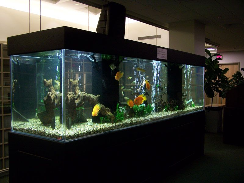 At Least One Large Fish Tank In The Living Room And One In The Bedroom Fresh Water Fish Tank Large Fish Tanks Fish Tank