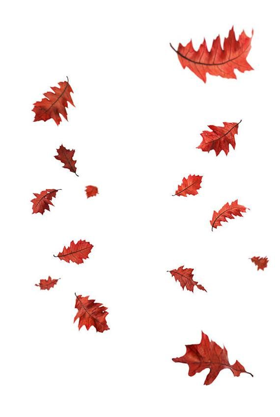 Autumn Leaves Overlays Digital Overlay Falling Leaves Fall Etsy Photoshop Overlays Background Images Wallpapers Digital Overlays
