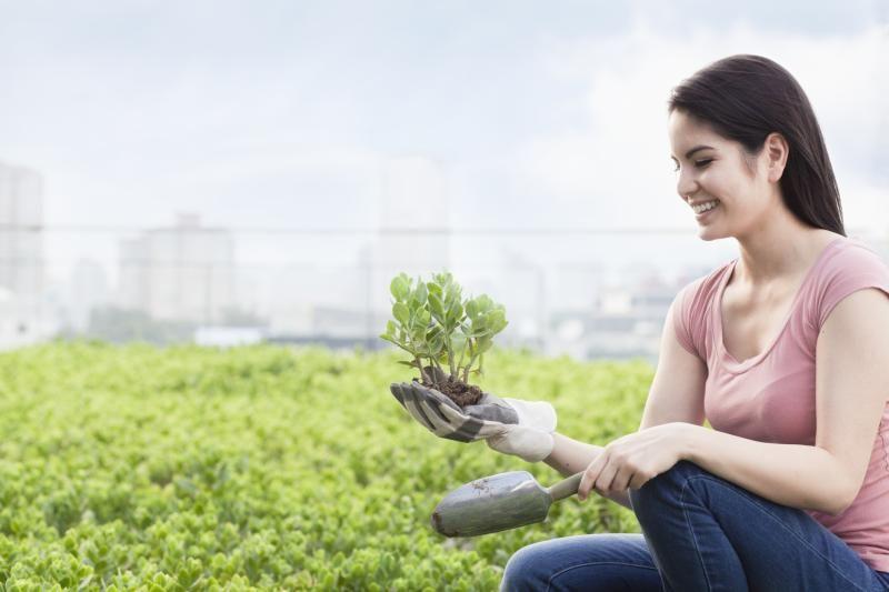Hobby Farm Tax Deductions Sapling Hobby Farms Tax Write Offs Small Farm
