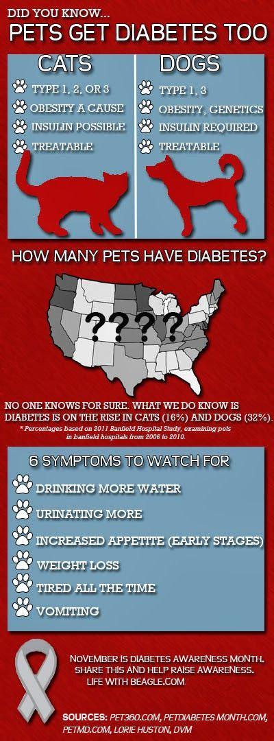 Diabetes Awareness Diabetic Dog Diabetes Awareness Month Diabetes Awareness