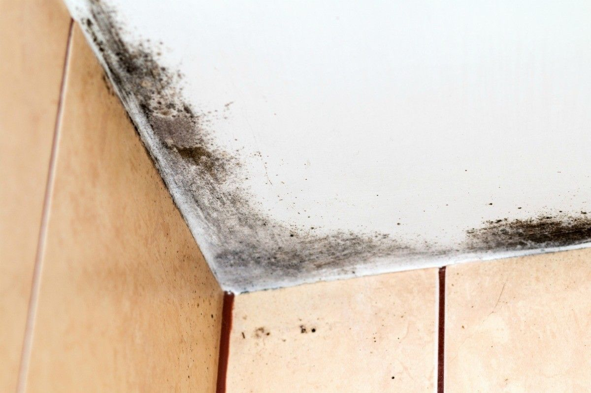 How Do I Remove Black Mold On The Ceiling Mold On Bathroom Ceiling Mold In Bathroom Remove Black Mold