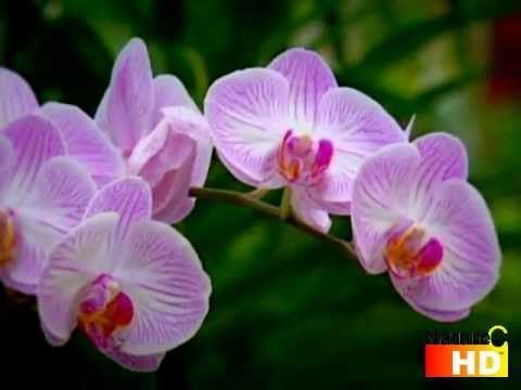Top Camouflage Orchid Mantis Youtube With Images Orchid
