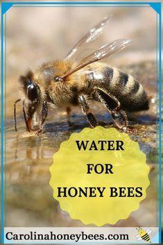 Water for Bees in Your Backyard in 2020 | Bijen houden, Bijen