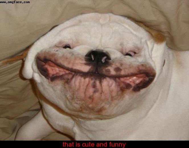Good Look Alike Chubby Adorable Dog - 64323a5da194781ec383e2babf45cd9c  HD_764362  .jpg