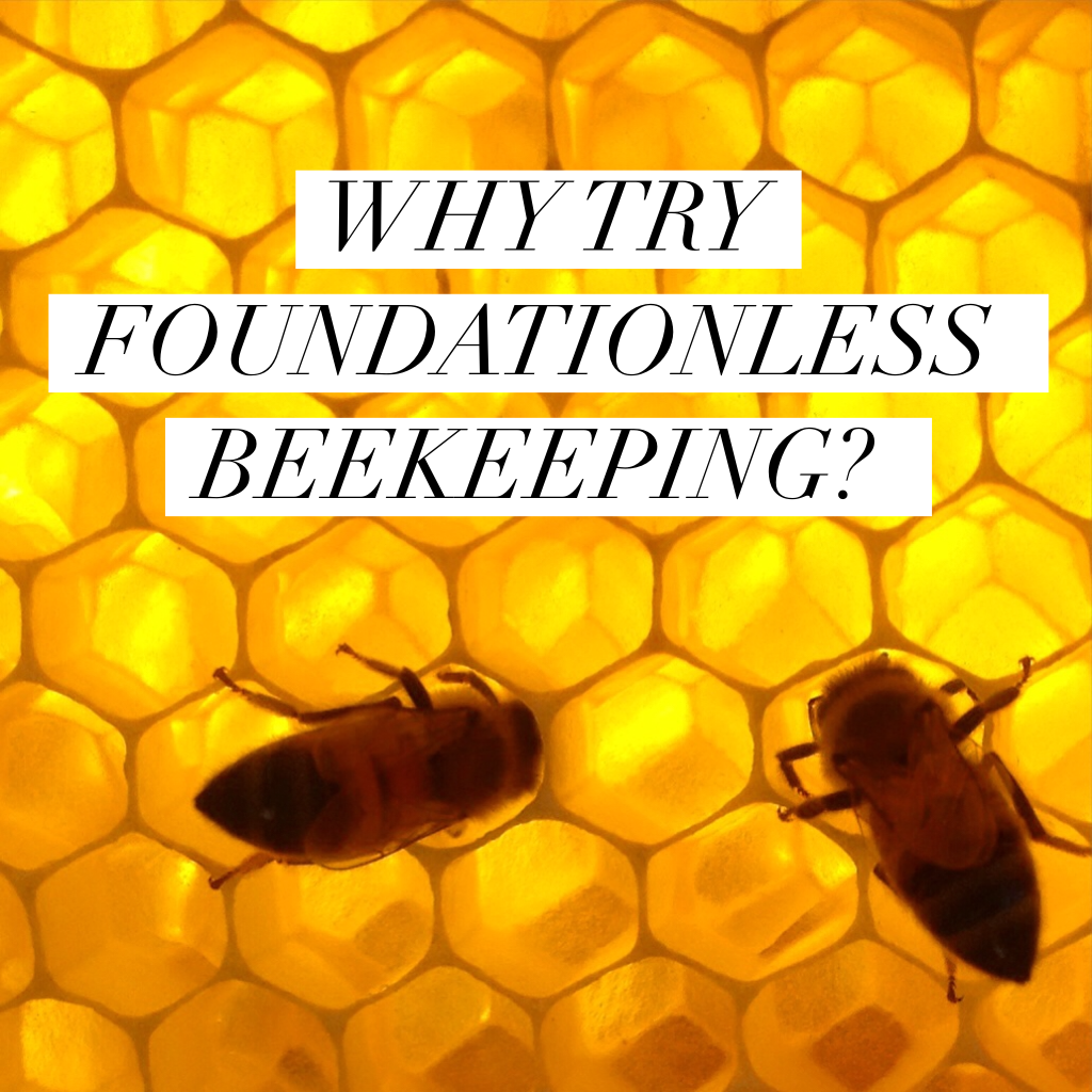 WHY TRY FOUNDATIONLESS BEEKEEPING? | Bee keeping, Why try ...