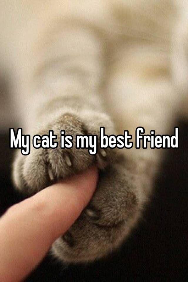I Miss My Cat
