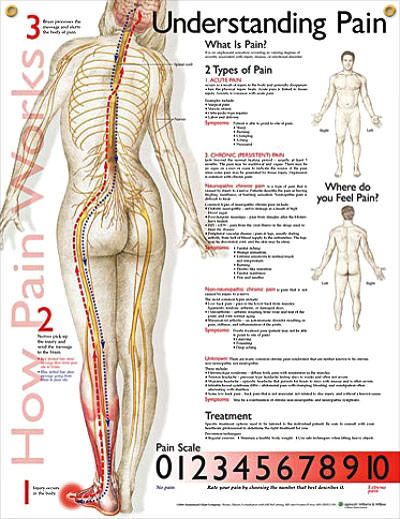 Understanding Pain Chart 20x26 | Medical Terminology | Pain scale