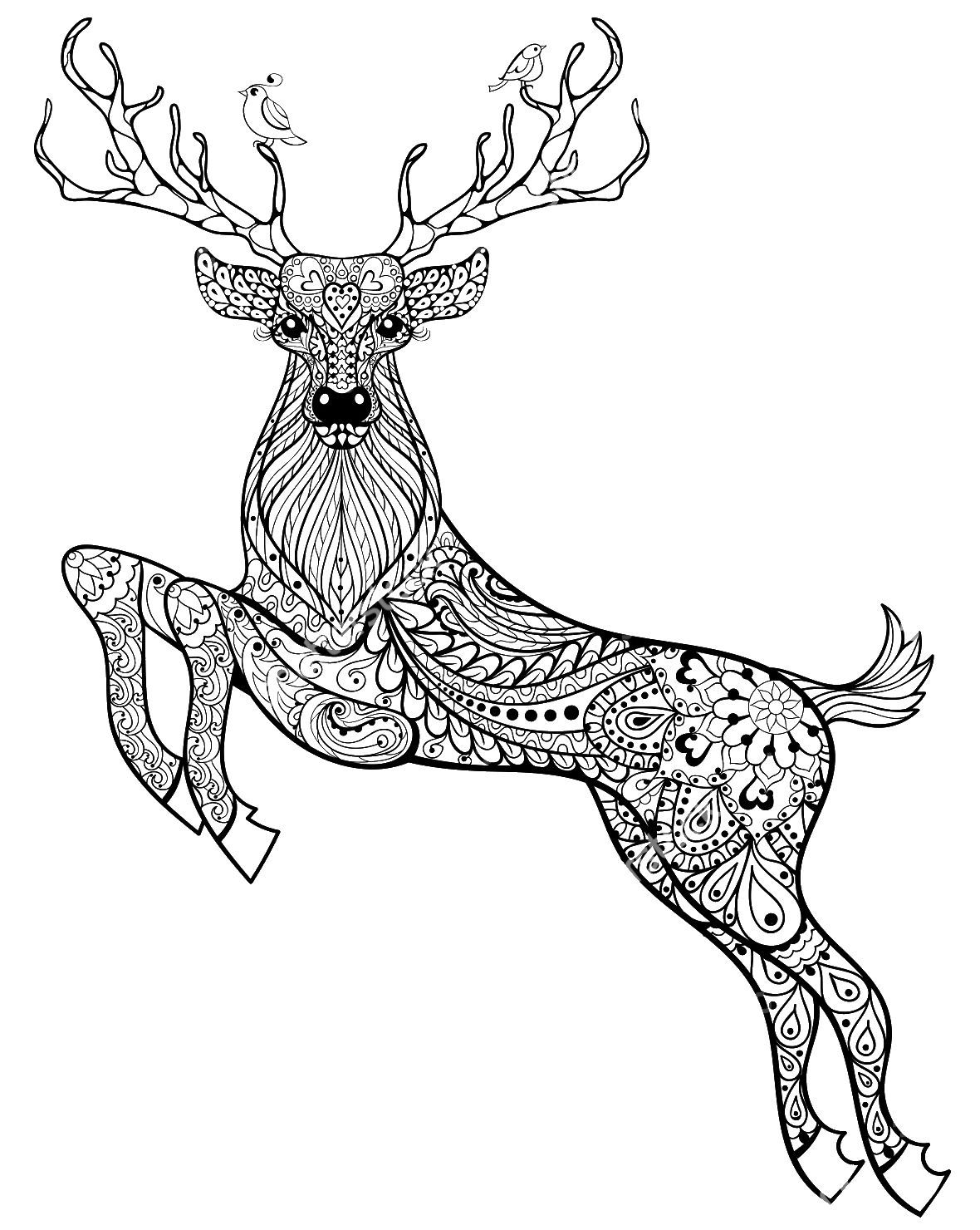 Adult Coloring Pages Deer --> If you\'re looking for the top coloring ...