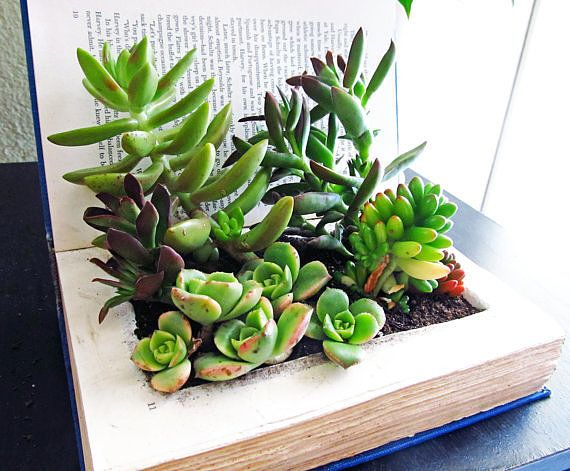 cute office desk plants and planters from etsy | office desk