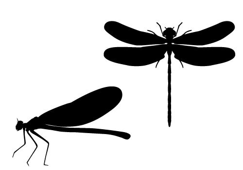 dragonfly silhouette vector in marshes free download silhouette