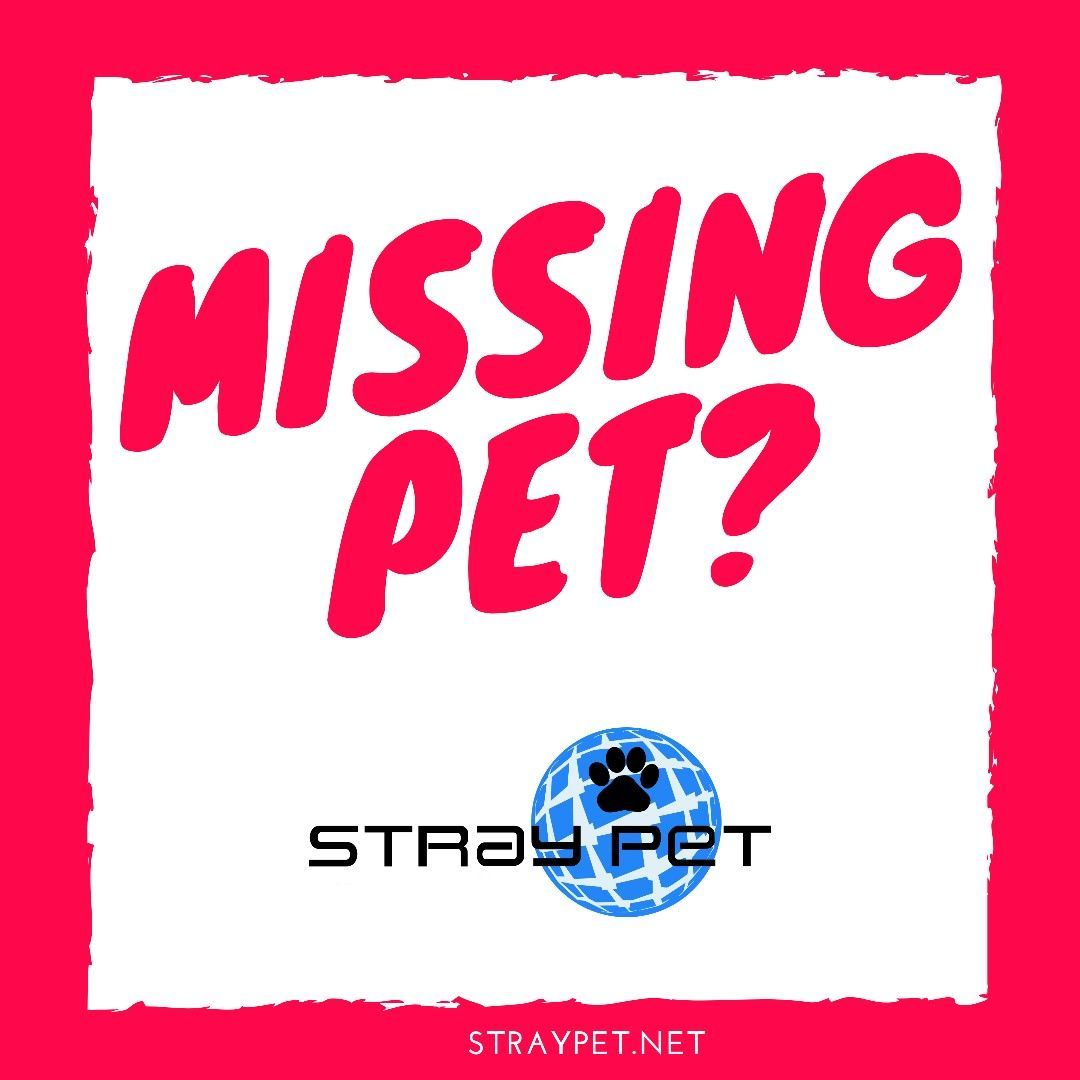 Missing pettry stray pet email blasts ideas of email