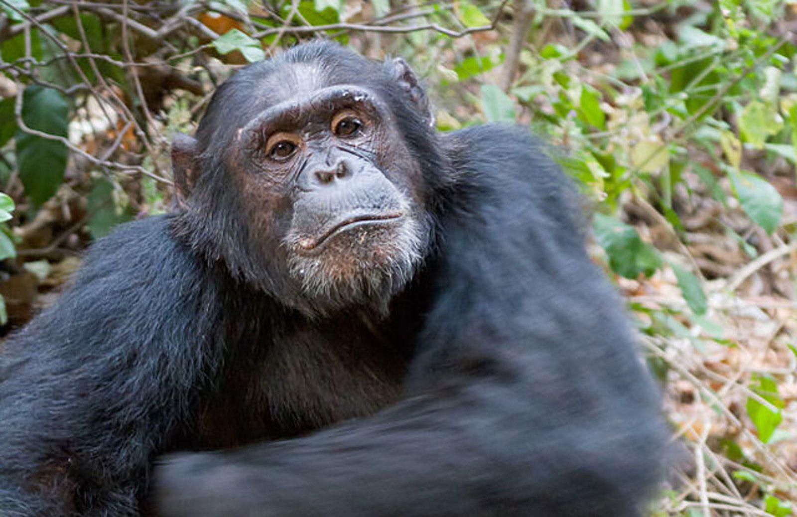Senate Passes the Captive Primate Safety Act! Primates