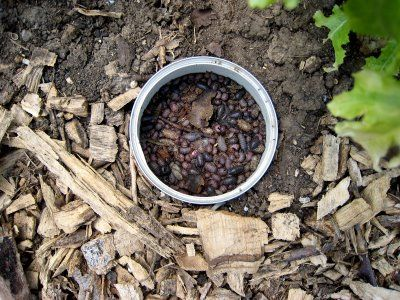Pill Bugs Gone Hail Update Garden Pests Pill Bug Garden Bugs