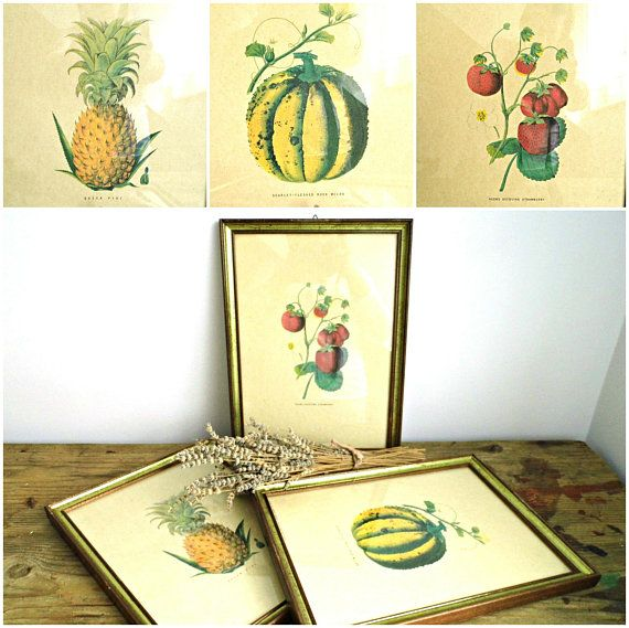 Vintage Grafiche Tassotti Fruit Art Print Made in Italy Hand Painted ...
