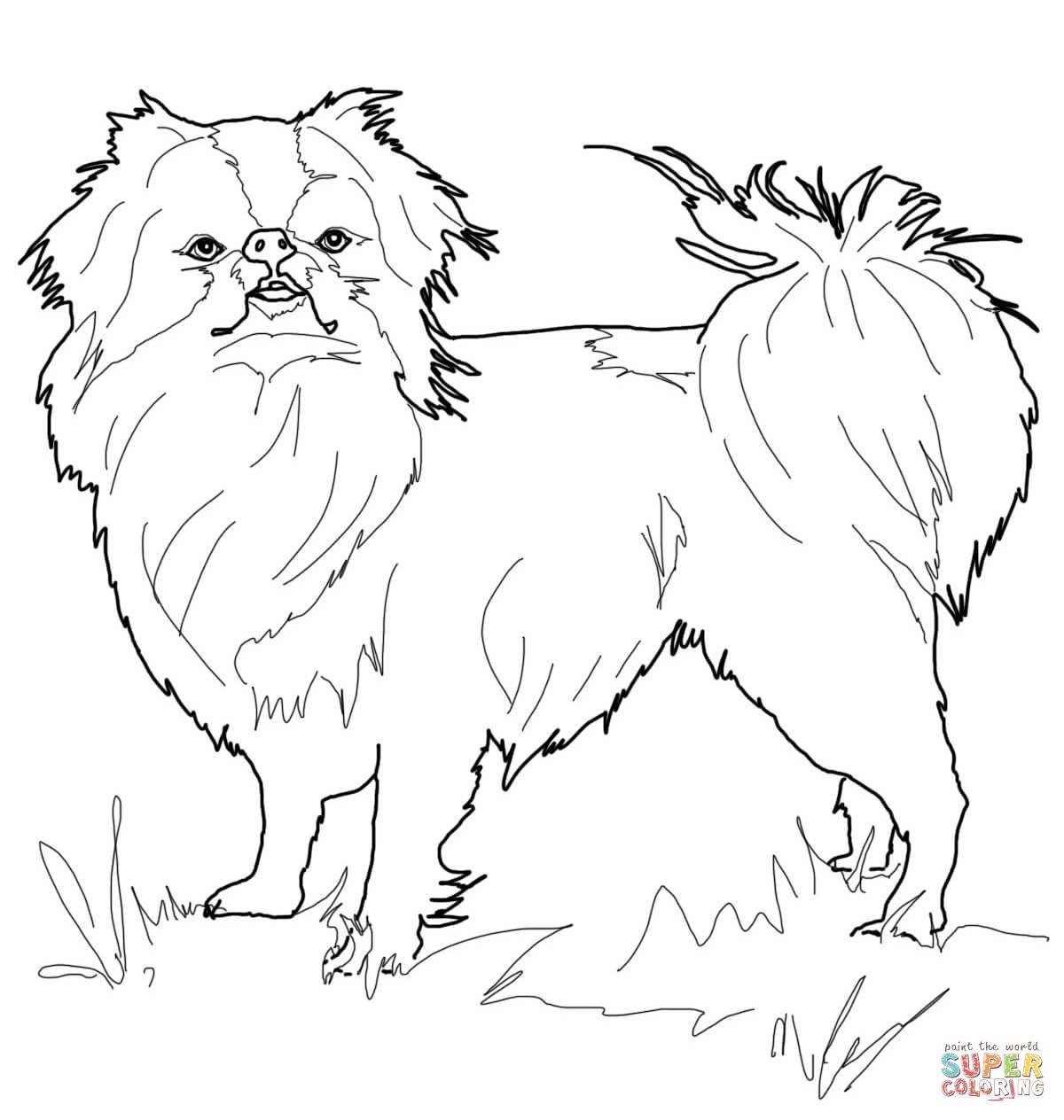 Japanese Chin   Super Coloring   Dog coloring page ...