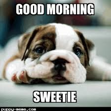 Cutest Good Morning Sweetie Memes Images