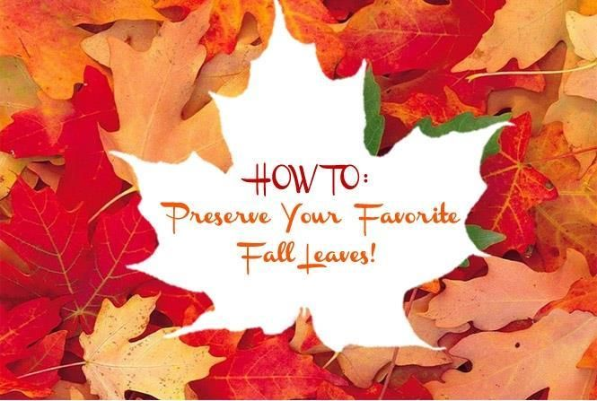How to: Preserve Your Favorite Fall Leaves | Just Imagine - Daily Dose of Creativity