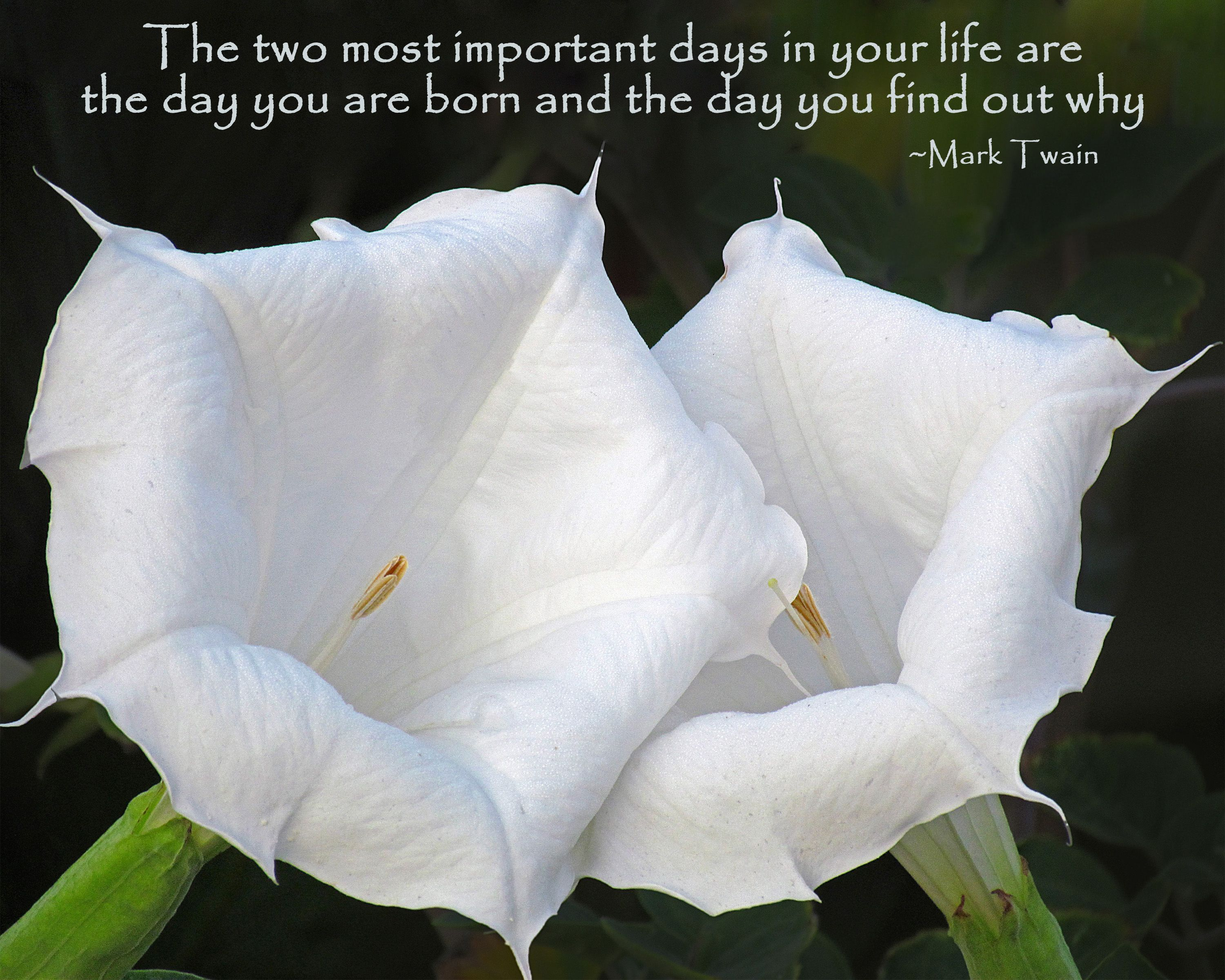The Two Most Important Days Mark twain quotes, Flowers