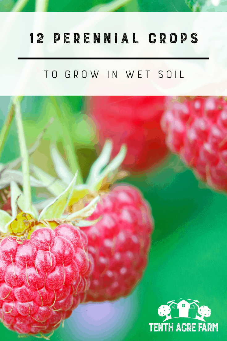 12 Perennial Crops To Grow In Wet Soil Perennials Organic Gardening Garden Planning