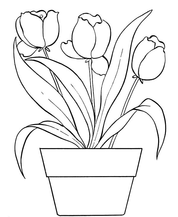 Beautiful Tulips On The Pot Coloring Page Printable Flower Coloring Pages Flower Coloring Pages Coloring Pages