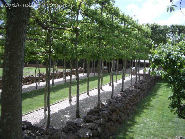 Garden Ideas Victoria Australia espaliered pyrus - paul bangay design at 'larundel' victoria