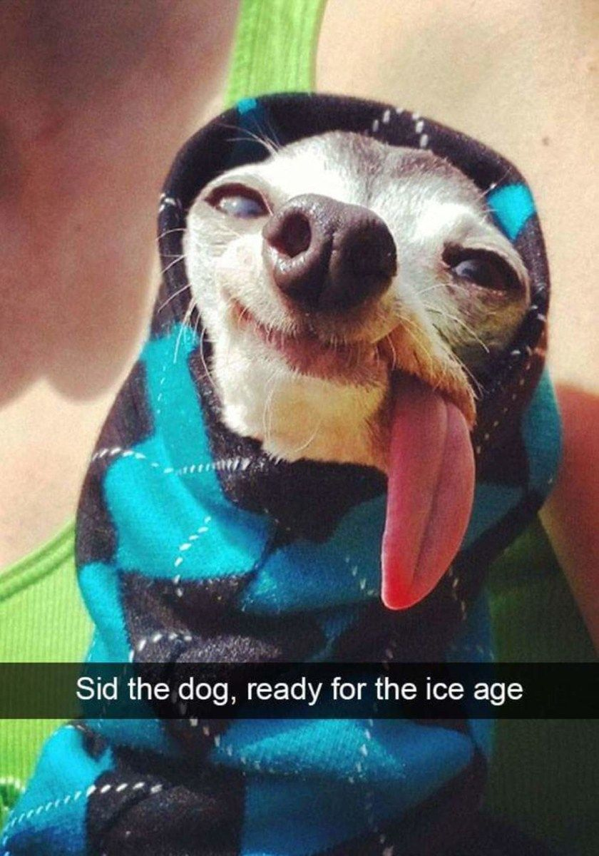 New Funny Dogs Sid the dog, ready for the ice age Sid the dog, ready for the ice age | A funny dog❤ | Funny dog memes  #wagpets #funnymemes #funnydogs 6