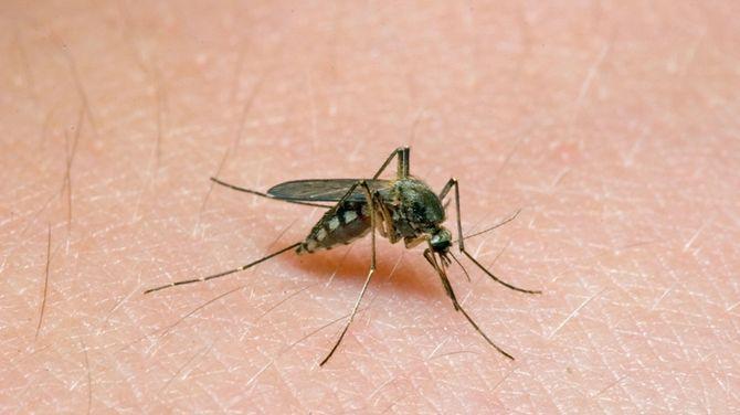 Trik proti dotieravým komárom