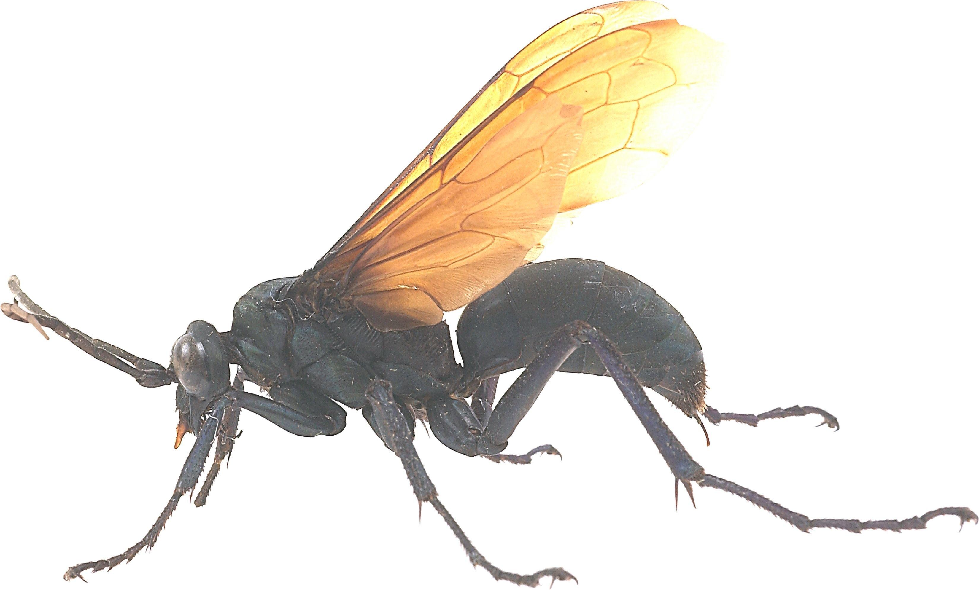 How to make sugar water for wasps wasp traps wasp wasp