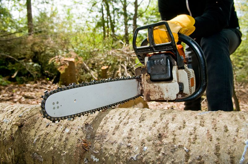 Excavation services near me_tree removal near me_stump