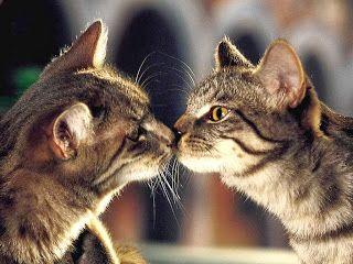 Love Cute Cat Couple Images Cuteanimals