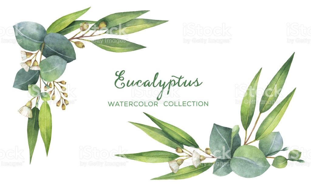 Watercolor Hand Painted Wreath With Green Eucalyptus Leaves And