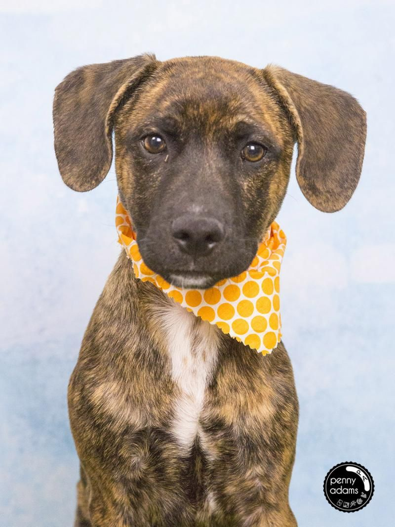 Adopt ROSCOE on tennessee adoptables Shelter dogs