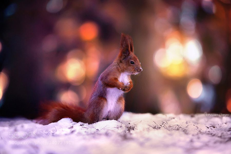 http://ift.tt/1K6283m #animals  by PolyushkoSergey http://ift.tt/1opHEZC #pierceandbiersadorf